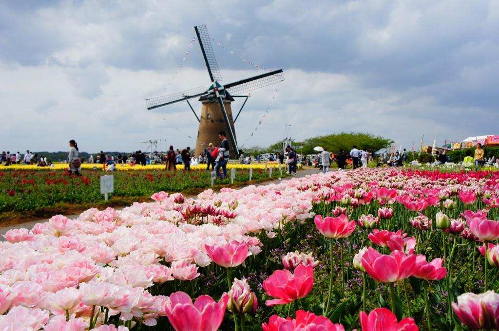 งานเทศกาลทุ่งดอกทิวลิปอันโด่งดัง